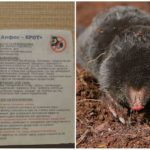 Alphos-Mole Tabletler