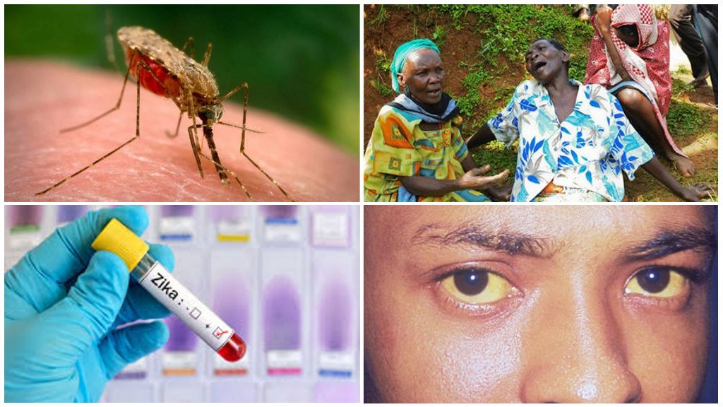 Zika, Batı Nil ve Sarı Ateş virüsleri