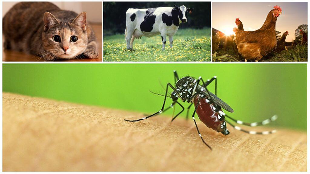Sivrisinek ısırığı hayvanlar