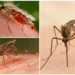 Sivrisinek ısırığı