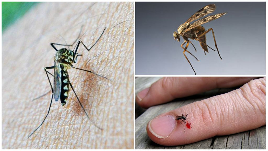 Kan grubu ve sivrisinekler