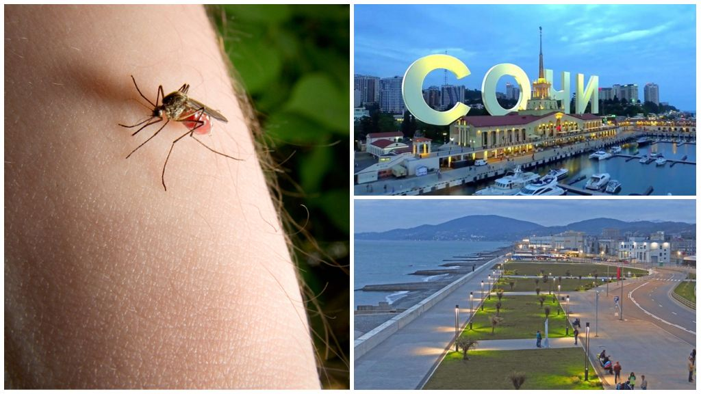 Soçi sivrisinekleri