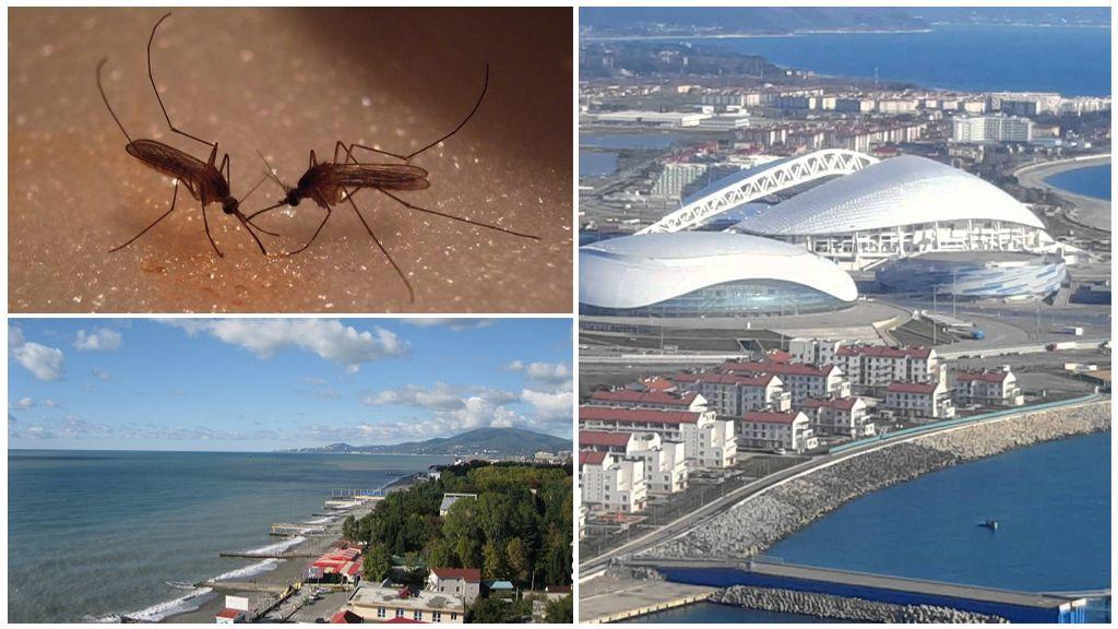 Krasnodar bölgesinde sivrisinekler