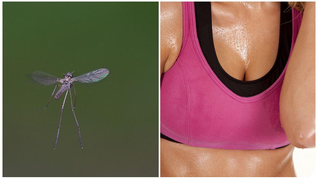 Sivrisinekler ve ter kokusu