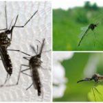 Sivrisinek bip