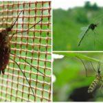 Uçan sivrisinek
