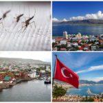 Sivrisinek içermeyen ülkeler
