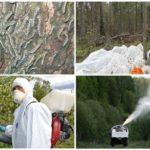 Sibirya ipekböceği mücadele