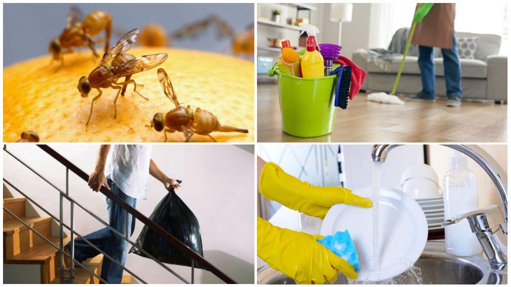 Drosophila uçar mücadele yolları