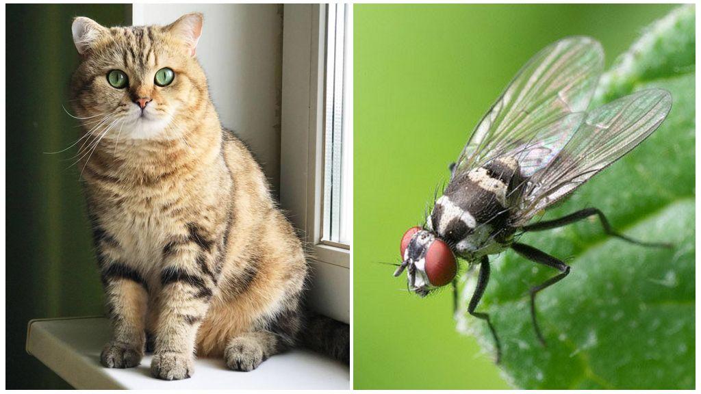 Kedi ve sinek