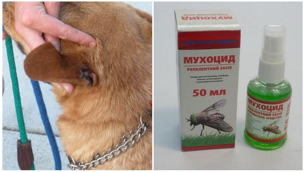 Köpekler için sinek uç