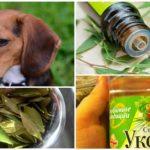 Köpekler için halk ilaçları kullanımı