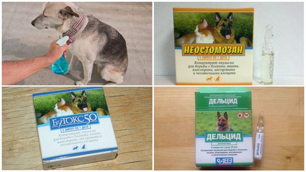 Köpekleri sineklerden tedavi etmeye hazırlıklar