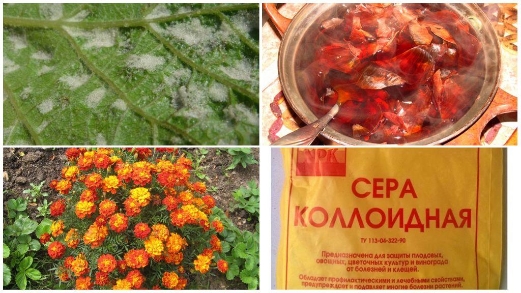 Üzüm akarları ile ilgili geleneksel yöntemler