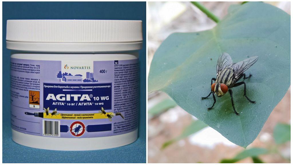 Agita'nın sineklerden kullanımı