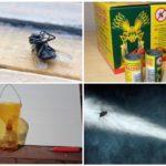Oturma odasında sinekler mücadele