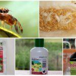 Kavun sinekleri ile savaşan kimyasallar