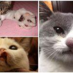 Kedi ısırığı wasp