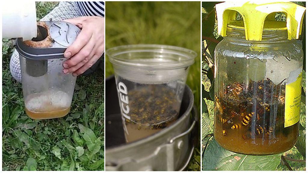 Yaban arısı tuzakları