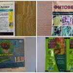 Soğan sinekleri ile savaşmak için böcek ilacı