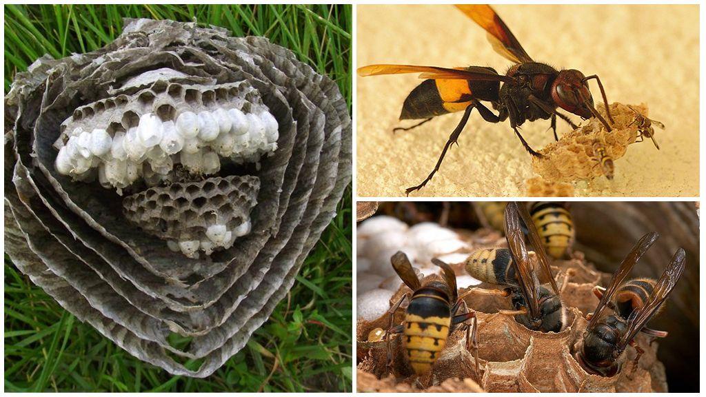 Hornet yuva bölümü