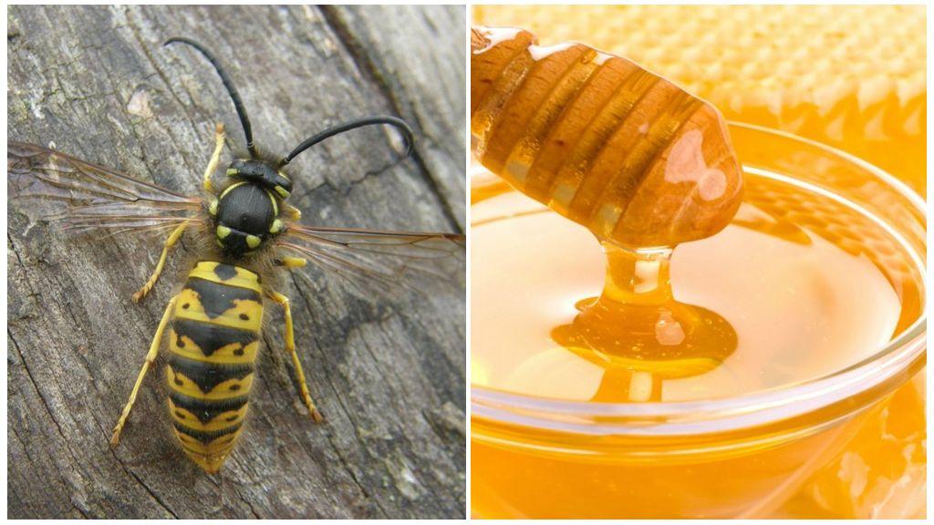 Yaban arıları ve bal