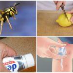 Böcek ısırıkları için halk ilaçları