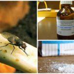 Soğan sineği ile uğraşmak için halk tarifleri