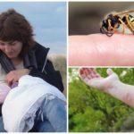Laktasyon sırasında yaban arısı sokması tehlikesi