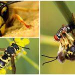 Wasp Görsel Yardımı