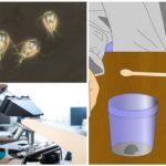 Giardia'nın varlığı için testler