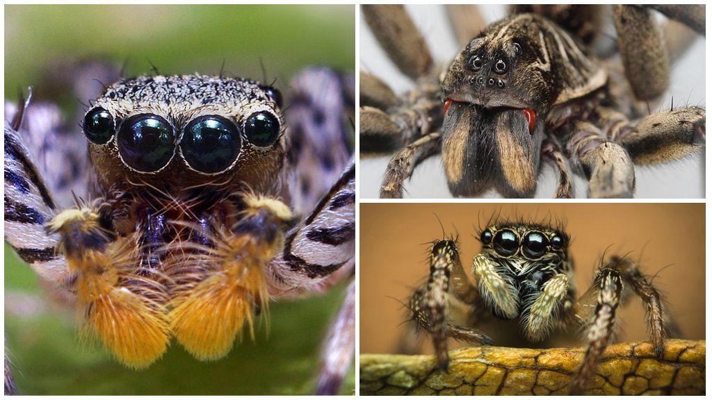 Örümcek gözleri
