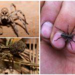 Kurt örümcekler