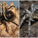 Kırım örümcekleri