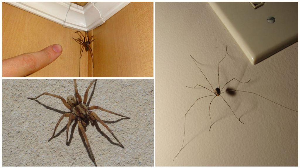 Evde örümcekler