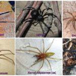 En korkunç örümcekler