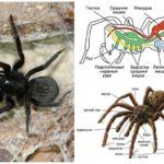 Örümcek yapısı
